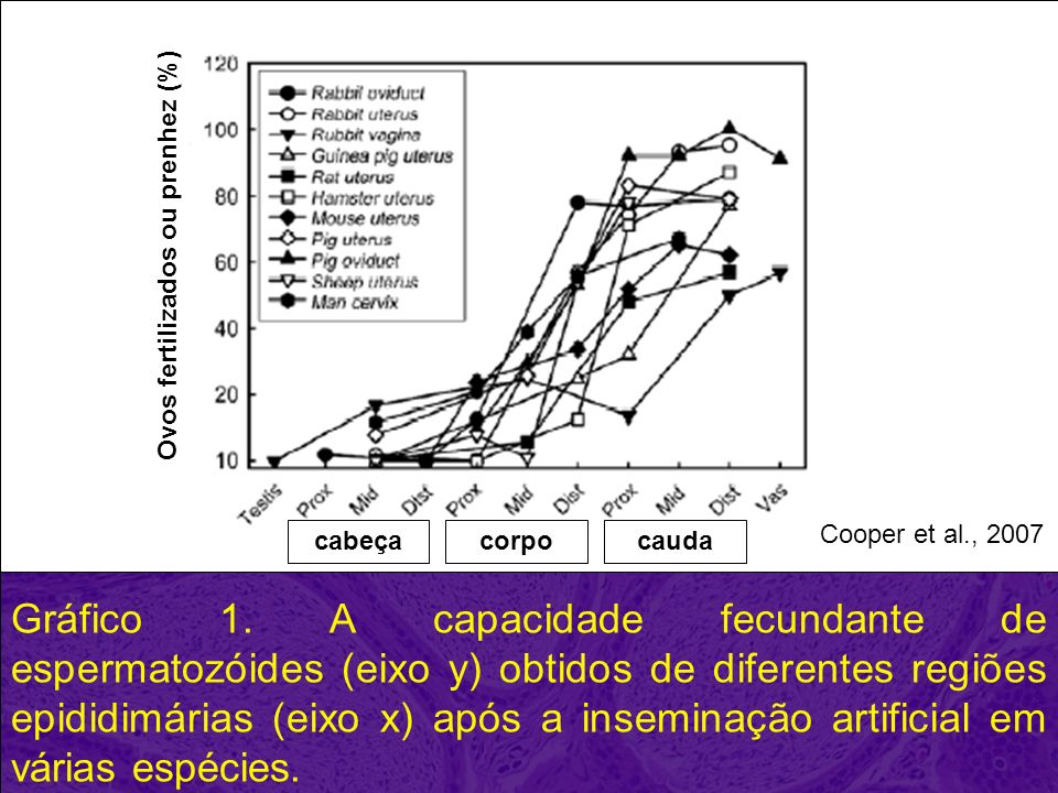 Gráfico 1. A capacidade fecundante de espermatozóides (eixo y) obtidos de diferentes regiões epididimárias (eixo x) após a inseminação artificial em v