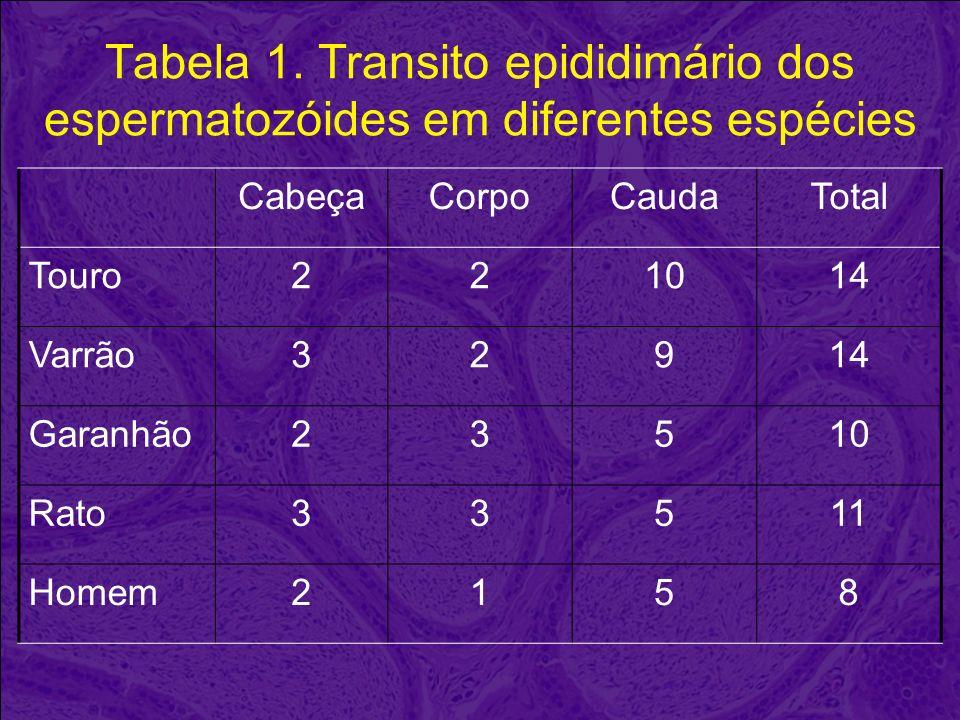Tabela 1. Transito epididimário dos espermatozóides em diferentes espécies CabeçaCorpoCaudaTotal Touro221014 Varrão32914 Garanhão23510 Rato33511 Homem
