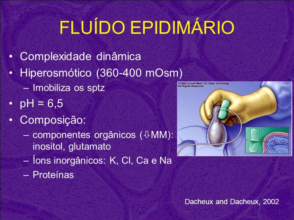 FLUÍDO EPIDIMÁRIO Complexidade dinâmica Hiperosmótico (360-400 mOsm) –Imobiliza os sptz pH = 6,5 Composição: –componentes orgânicos ( MM): inositol, g