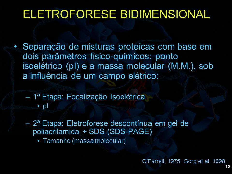 13 Separação de misturas proteícas com base em dois parâmetros físico-químicos: ponto isoelétrico (pI) e a massa molecular (M.M.), sob a influência de
