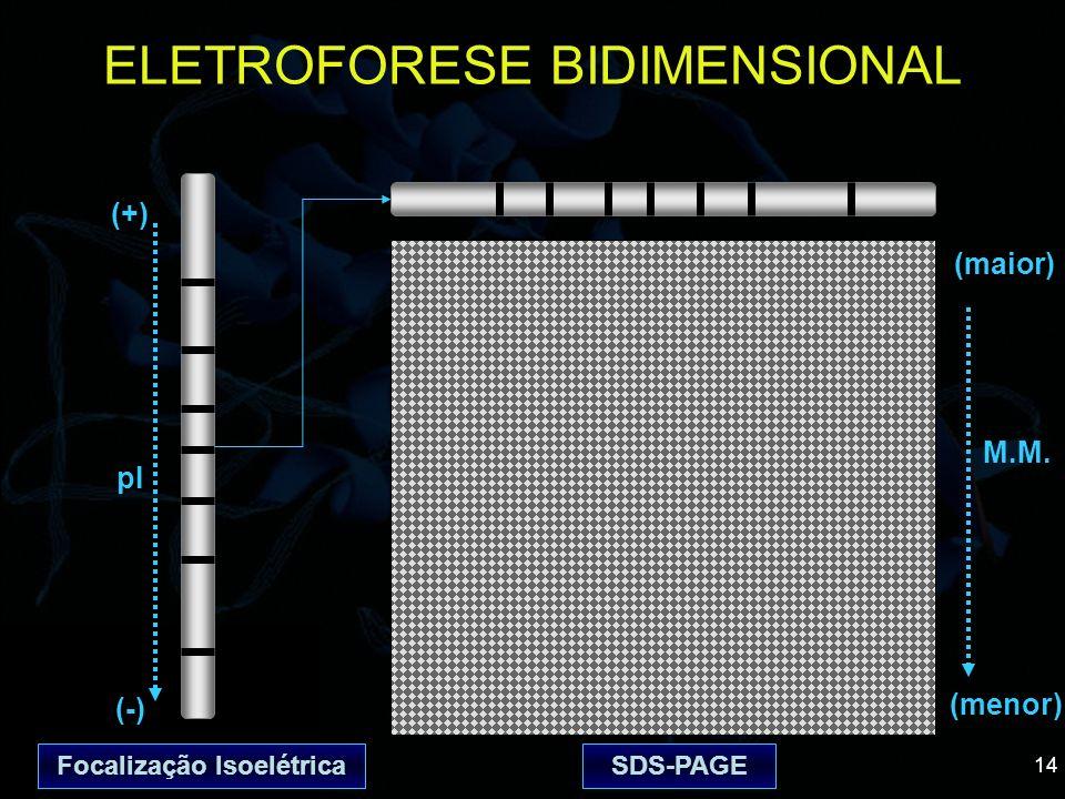 14 ELETROFORESE BIDIMENSIONAL (+) (-) pI (menor) M.M. SDS-PAGEFocalização Isoelétrica (maior)