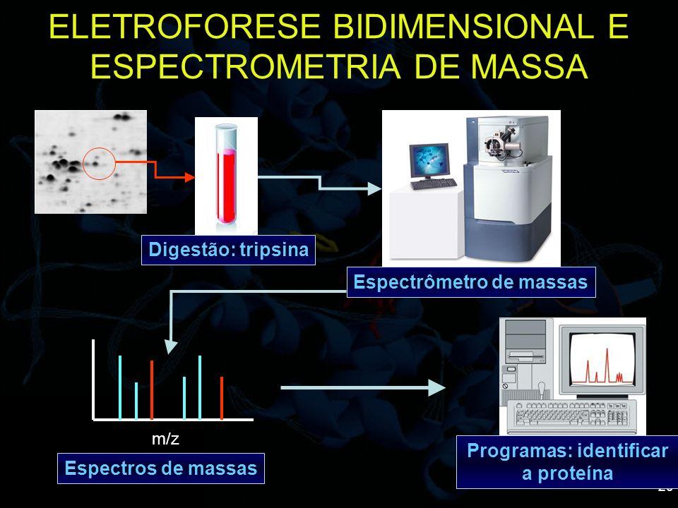 20 ELETROFORESE BIDIMENSIONAL E ESPECTROMETRIA DE MASSA Digestão: tripsina Espectrômetro de massas m/z Espectros de massas Programas: identificar a pr