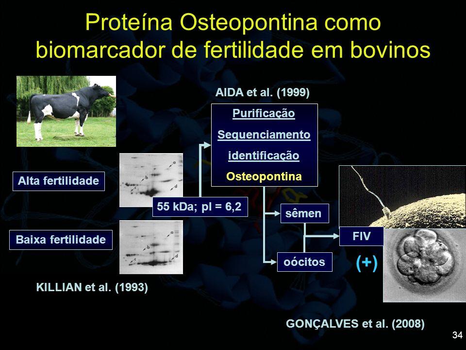 34 Proteína Osteopontina como biomarcador de fertilidade em bovinos Alta fertilidade Baixa fertilidade Purificação Sequenciamento identificação Osteop