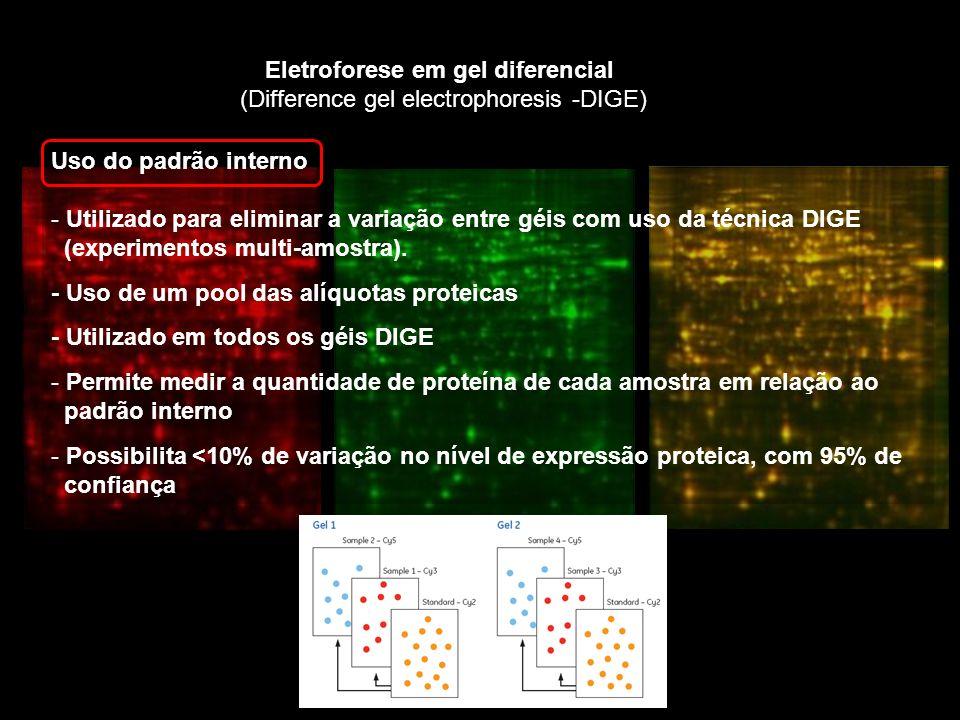 Eletroforese em gel diferencial (Difference gel electrophoresis -DIGE) Uso do padrão interno - Utilizado para eliminar a variação entre géis com uso da técnica DIGE (experimentos multi-amostra).