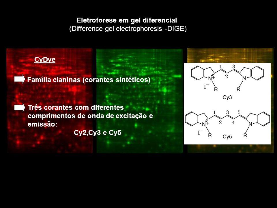 Eletroforese em gel diferencial (Difference gel electrophoresis -DIGE) CyDye Família cianinas (corantes sintéticos) Três corantes com diferentes comprimentos de onda de excitação e emissão: Cy2,Cy3 e Cy5