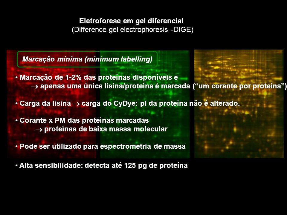 Eletroforese em gel diferencial (Difference gel electrophoresis -DIGE) Apenas Cy3 e Cy5 podem ser modificados para técnica Corantes ligados à maleimida ligação covalente ao grupo tiol dos resíduos de cisteína Todos os resíduos de cisteína são marcadas Corantes possuem carga elétrica neutra, não altera pI das proteínas Usado para pequenas quantidades de proteína 5 µg Marcação por saturação (saturation labelling)