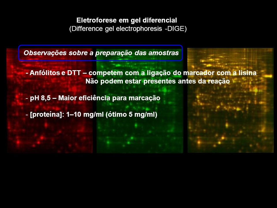 Eletroforese em gel diferencial (Difference gel electrophoresis -DIGE) Observações sobre a preparação das amostras - Anfólitos e DTT – competem com a ligação do marcador com a lisina Não podem estar presentes antes da reação - pH 8,5 – Maior eficiência para marcação - [proteína]: 1–10 mg/ml (ótimo 5 mg/ml)