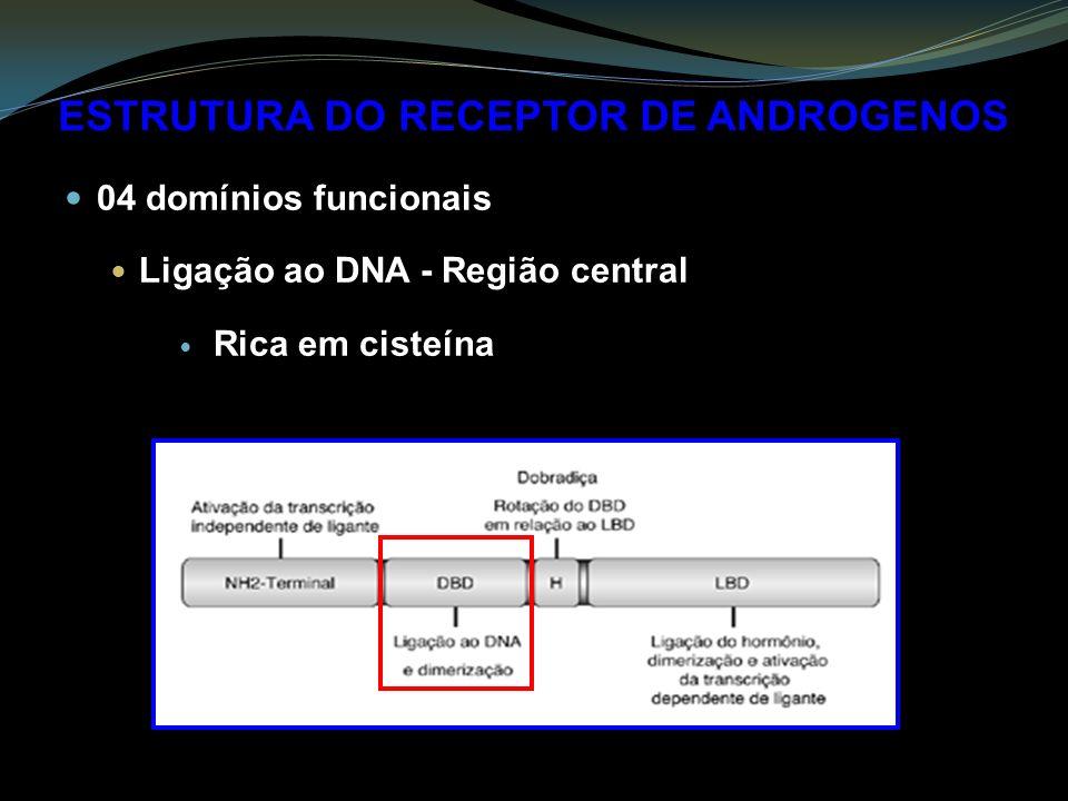 ESTRUTURA DO RECEPTOR DE ANDROGENOS 04 domínios funcionais Ligação ao DNA - Região central Rica em cisteína