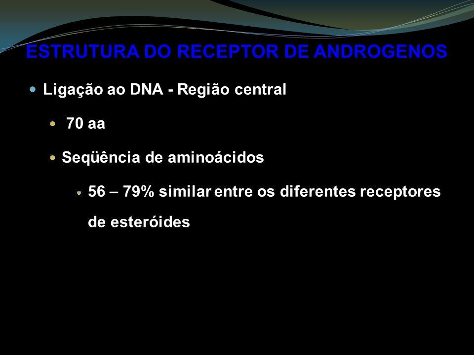 ESTRUTURA DO RECEPTOR DE ANDROGENOS Ligação ao DNA - Região central 70 aa Seqüência de aminoácidos 56 – 79% similar entre os diferentes receptores de esteróides