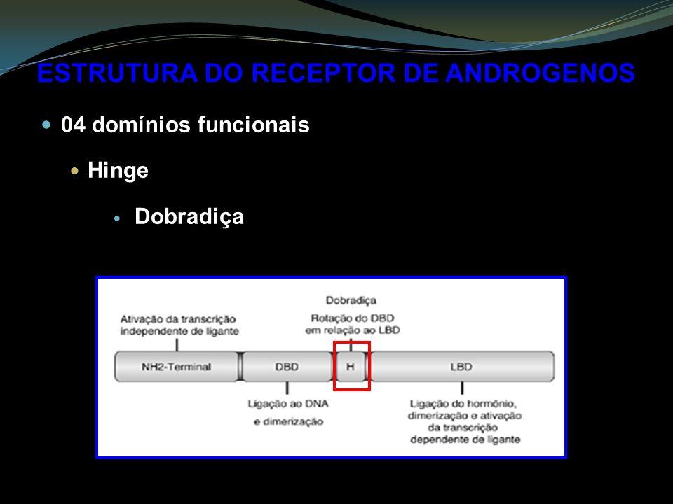 ESTRUTURA DO RECEPTOR DE ANDROGENOS 04 domínios funcionais Hinge Dobradiça