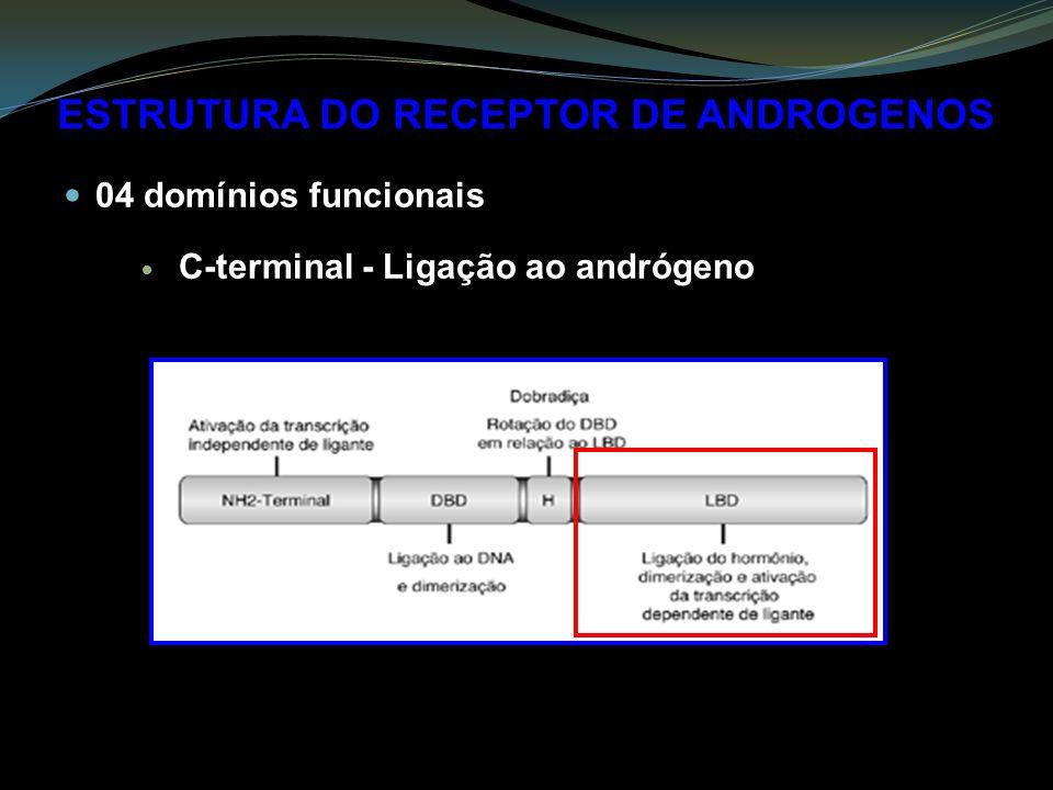 ESTRUTURA DO RECEPTOR DE ANDROGENOS 04 domínios funcionais C-terminal - Ligação ao andrógeno