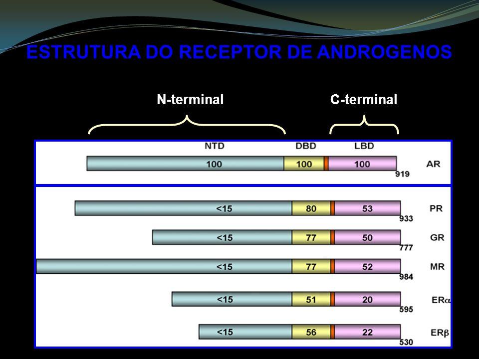 ESTRUTURA DO RECEPTOR DE ANDROGENOS N-terminalC-terminal
