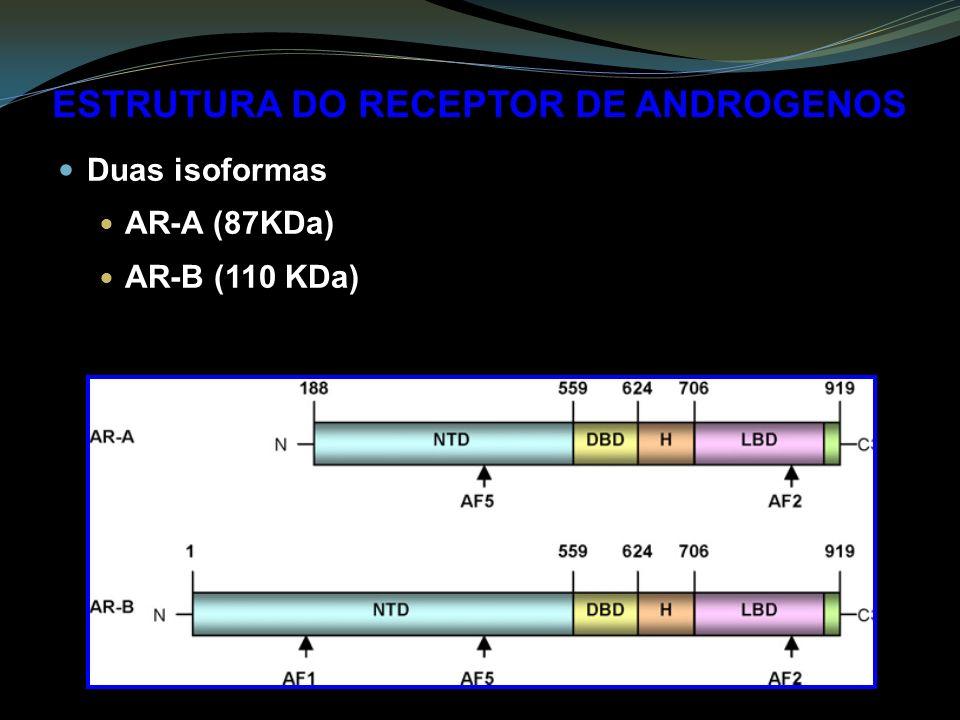 ESTRUTURA DO RECEPTOR DE ANDROGENOS Duas isoformas AR-A (87KDa) AR-B (110 KDa)