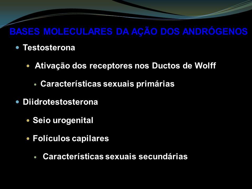 Testosterona Ativação dos receptores nos Ductos de Wolff Características sexuais primárias Diidrotestosterona Seio urogenital Folículos capilares Características sexuais secundárias BASES MOLECULARES DA AÇÃO DOS ANDRÓGENOS