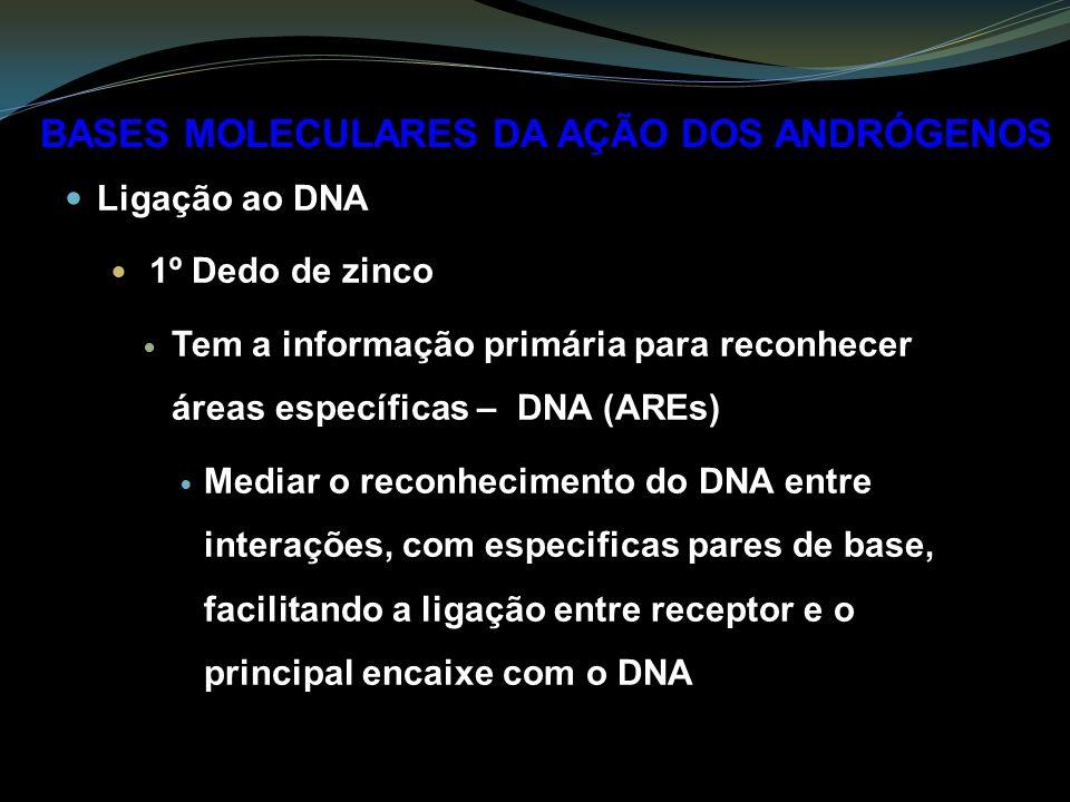 Ligação ao DNA 1º Dedo de zinco Tem a informação primária para reconhecer áreas específicas – DNA (AREs) Mediar o reconhecimento do DNA entre interações, com especificas pares de base, facilitando a ligação entre receptor e o principal encaixe com o DNA BASES MOLECULARES DA AÇÃO DOS ANDRÓGENOS