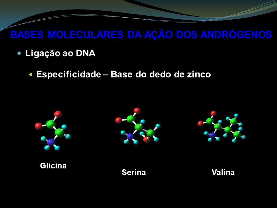 Ligação ao DNA Especificidade – Base do dedo de zinco BASES MOLECULARES DA AÇÃO DOS ANDRÓGENOS Serina Glicina Valina
