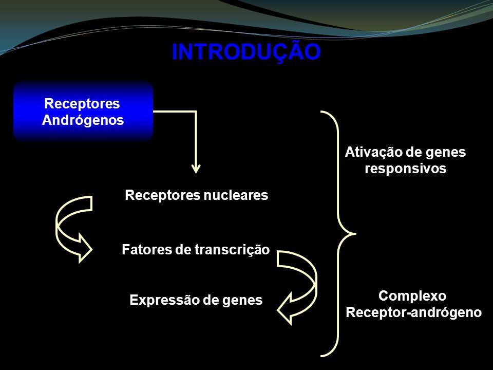 INTRODUÇÃO Receptores Andrógenos Receptores nucleares Fatores de transcrição Expressão de genes Ativação de genes responsivos Complexo Receptor-andróg