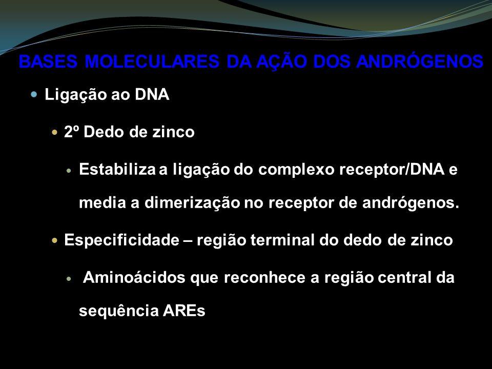 Ligação ao DNA 2º Dedo de zinco Estabiliza a ligação do complexo receptor/DNA e media a dimerização no receptor de andrógenos.