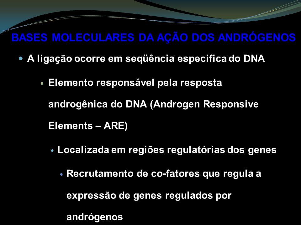 A ligação ocorre em seqüência especifica do DNA Elemento responsável pela resposta androgênica do DNA (Androgen Responsive Elements – ARE) Localizada em regiões regulatórias dos genes Recrutamento de co-fatores que regula a expressão de genes regulados por andrógenos BASES MOLECULARES DA AÇÃO DOS ANDRÓGENOS