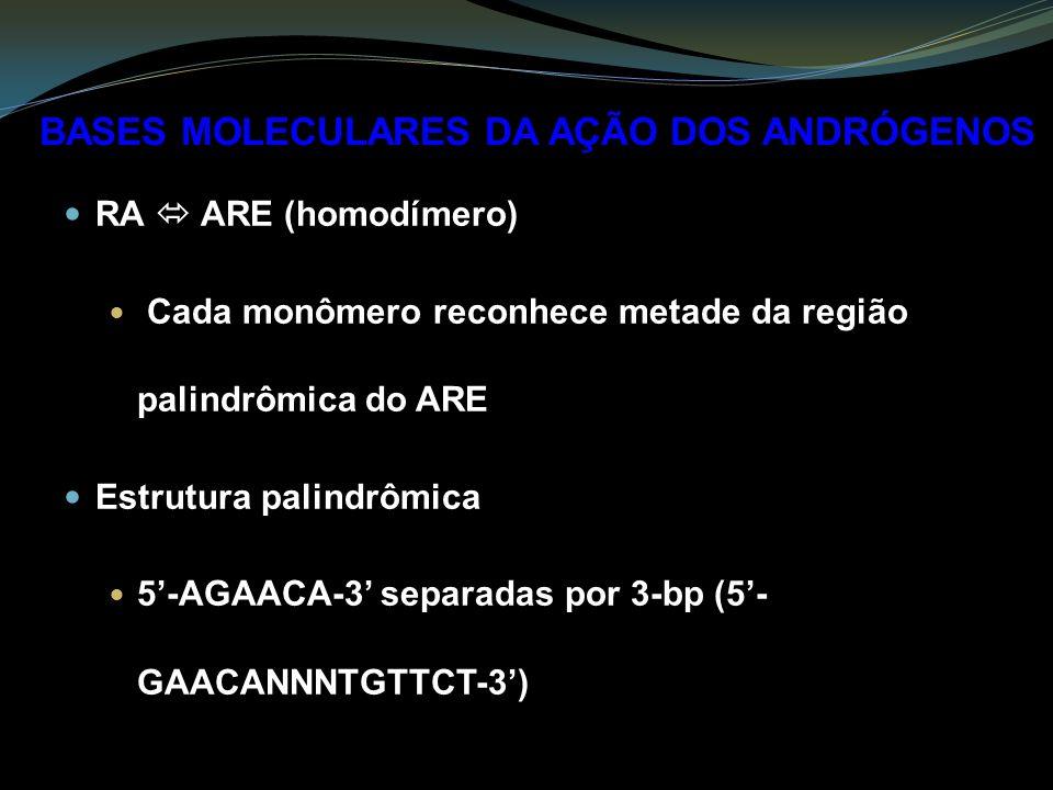 RA ARE (homodímero) Cada monômero reconhece metade da região palindrômica do ARE Estrutura palindrômica 5-AGAACA-3 separadas por 3-bp (5- GAACANNNTGTTCT-3) BASES MOLECULARES DA AÇÃO DOS ANDRÓGENOS