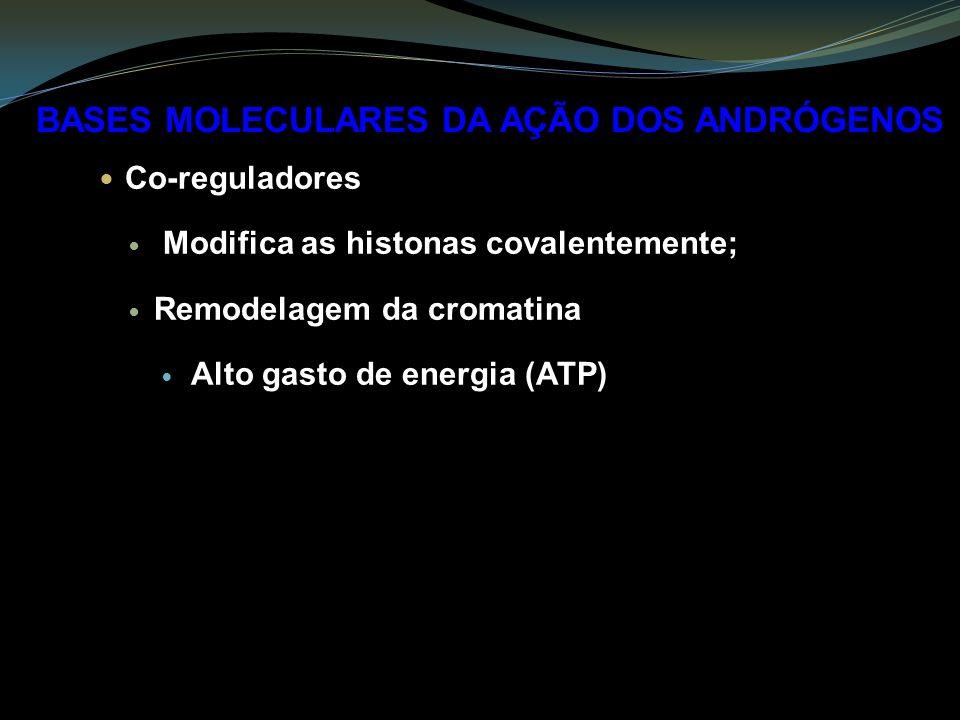 Co-reguladores Modifica as histonas covalentemente; Remodelagem da cromatina Alto gasto de energia (ATP) BASES MOLECULARES DA AÇÃO DOS ANDRÓGENOS