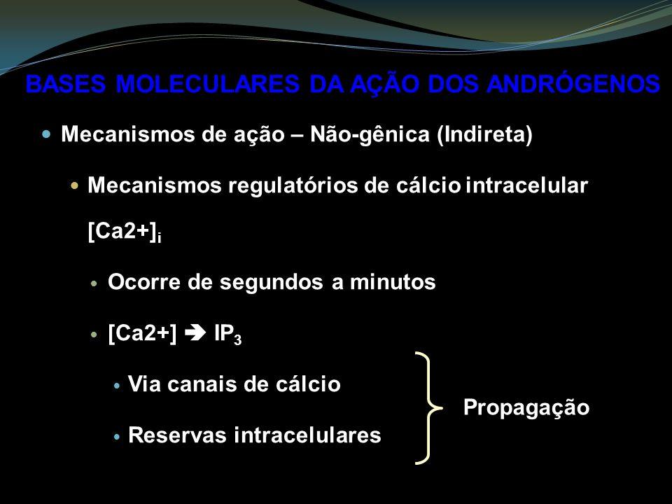 Mecanismos de ação – Não-gênica (Indireta) Mecanismos regulatórios de cálcio intracelular [Ca2+] i Ocorre de segundos a minutos [Ca2+] IP 3 Via canais de cálcio Reservas intracelulares BASES MOLECULARES DA AÇÃO DOS ANDRÓGENOS Propagação