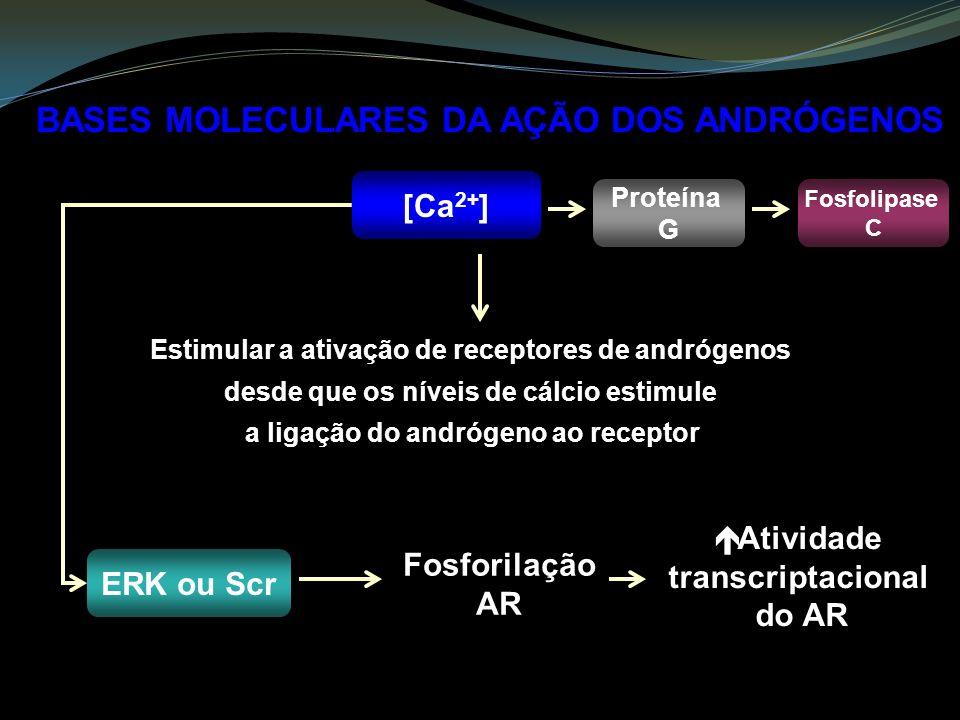 BASES MOLECULARES DA AÇÃO DOS ANDRÓGENOS [Ca 2+ ] Estimular a ativação de receptores de andrógenos desde que os níveis de cálcio estimule a ligação do andrógeno ao receptor ERK ou Scr Fosforilação AR Atividade transcriptacional do AR Proteína G Fosfolipase C