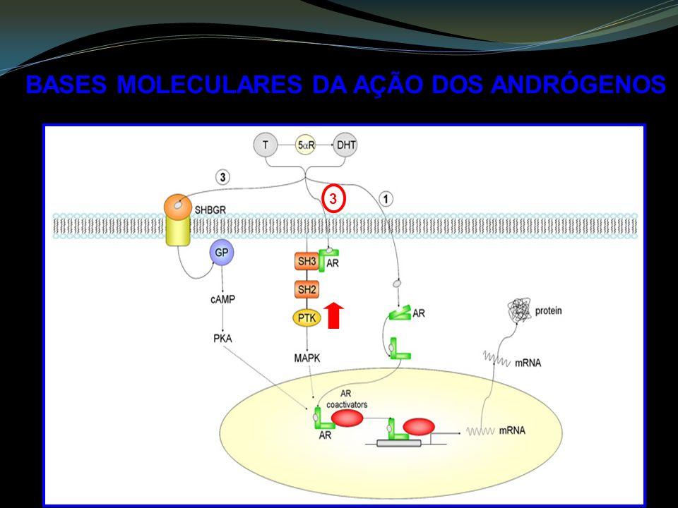 BASES MOLECULARES DA AÇÃO DOS ANDRÓGENOS 3