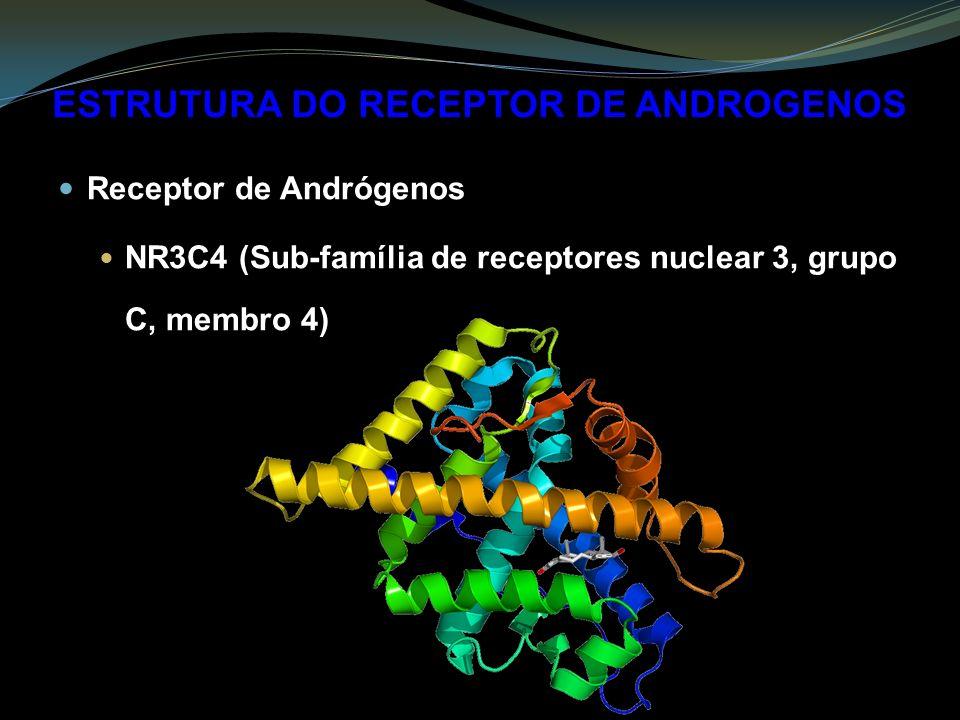 ESTRUTURA DO RECEPTOR DE ANDROGENOS Receptor de Andrógenos NR3C4 (Sub-família de receptores nuclear 3, grupo C, membro 4)