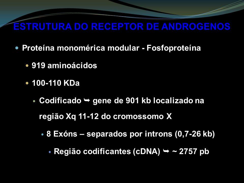 ESTRUTURA DO RECEPTOR DE ANDROGENOS Proteína monomérica modular - Fosfoproteína 919 aminoácidos 100-110 KDa Codificado gene de 901 kb localizado na região Xq 11-12 do cromossomo X 8 Exóns – separados por introns (0,7-26 kb) Região codificantes (cDNA) ~ 2757 pb
