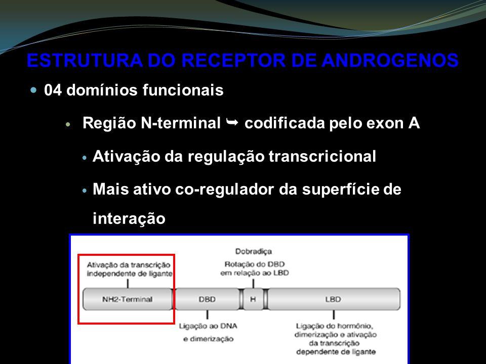ESTRUTURA DO RECEPTOR DE ANDROGENOS 04 domínios funcionais Região N-terminal codificada pelo exon A Ativação da regulação transcricional Mais ativo co