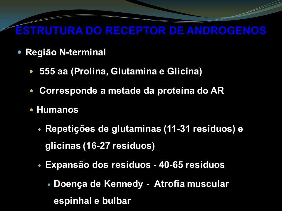 ESTRUTURA DO RECEPTOR DE ANDROGENOS Região N-terminal 555 aa (Prolina, Glutamina e Glicina) Corresponde a metade da proteína do AR Humanos Repetições de glutaminas (11-31 resíduos) e glicinas (16-27 resíduos) Expansão dos resíduos - 40-65 resíduos Doença de Kennedy - Atrofia muscular espinhal e bulbar