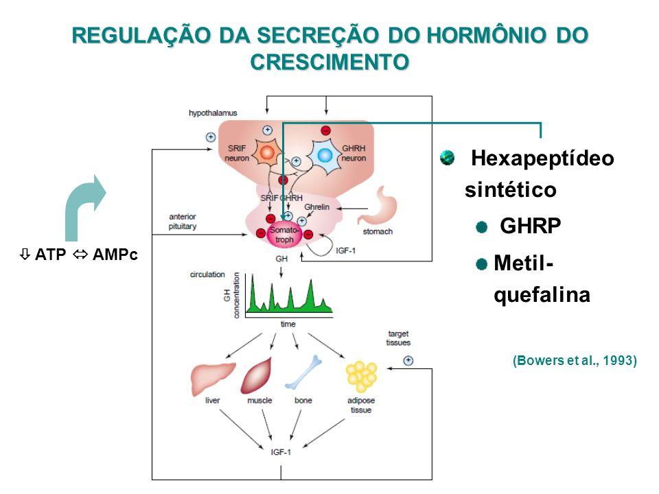 REGULAÇÃO DA SECREÇÃO DO HORMÔNIO DO CRESCIMENTO ATP AMPc Hexapeptídeo sintético GHRP Metil- quefalina (Bowers et al., 1993)