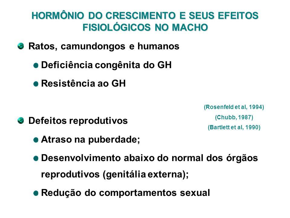 HORMÔNIO DO CRESCIMENTO E SEUS EFEITOS FISIOLÓGICOS NO MACHO Ratos, camundongos e humanos Deficiência congênita do GH Resistência ao GH Defeitos repro