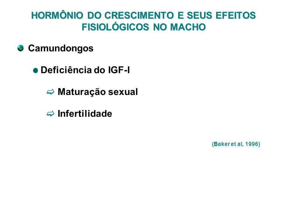 HORMÔNIO DO CRESCIMENTO E SEUS EFEITOS FISIOLÓGICOS NO MACHO Camundongos Deficiência do IGF-I Maturação sexual Infertilidade (Baker et al, 1996)