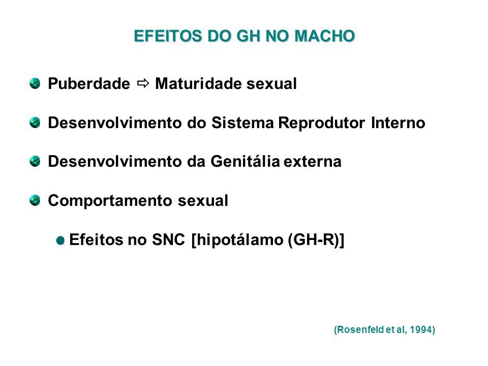 EFEITOS DO GH NO MACHO Puberdade Maturidade sexual Desenvolvimento do Sistema Reprodutor Interno Desenvolvimento da Genitália externa Comportamento se