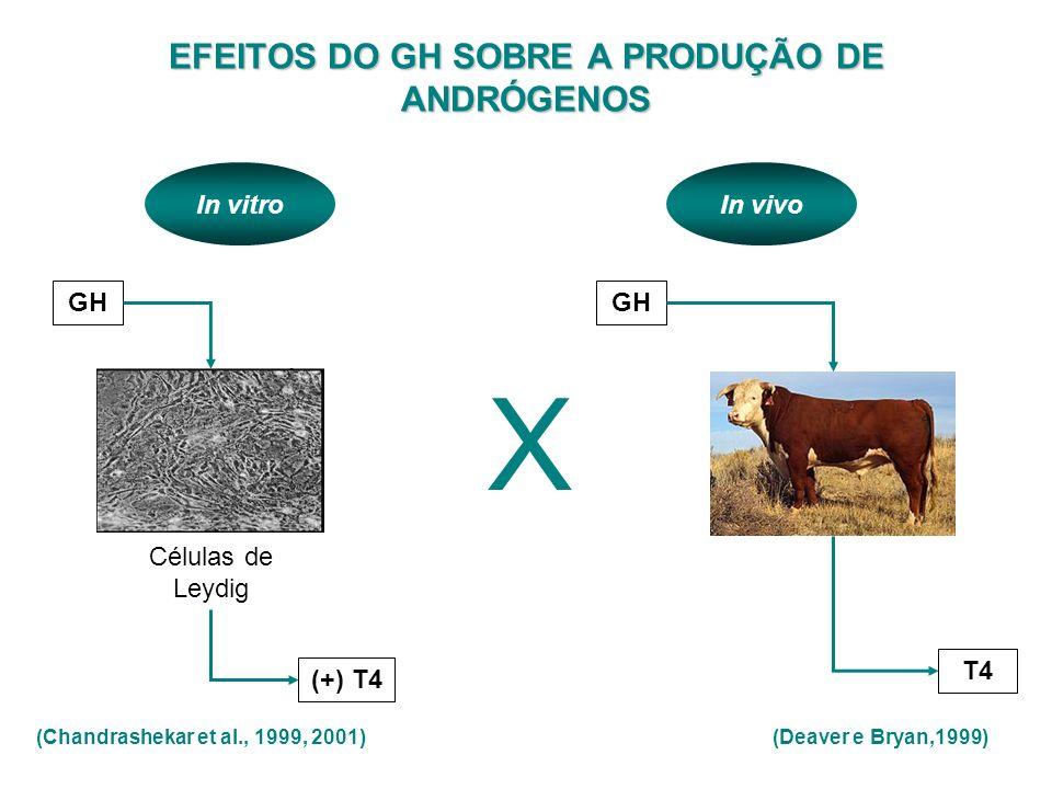 EFEITOS DO GH SOBRE A PRODUÇÃO DE ANDRÓGENOS GH Células de Leydig (+) T4 (Deaver e Bryan,1999) GH T4 X (Chandrashekar et al., 1999, 2001) In vitroIn v
