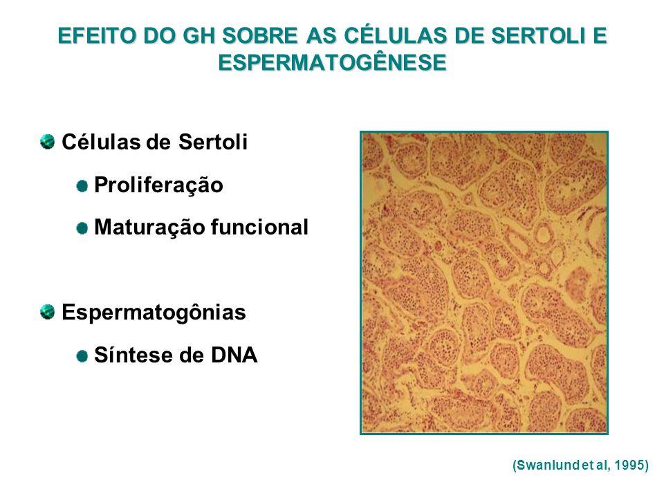 EFEITO DO GH SOBRE AS CÉLULAS DE SERTOLI E ESPERMATOGÊNESE Células de Sertoli Proliferação Maturação funcional Espermatogônias Síntese de DNA (Swanlun