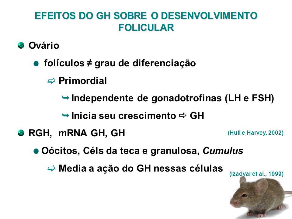 EFEITOS DO GH SOBRE O DESENVOLVIMENTO FOLICULAR (Hull e Harvey, 2002) Ovário folículos grau de diferenciação Primordial Independente de gonadotrofinas