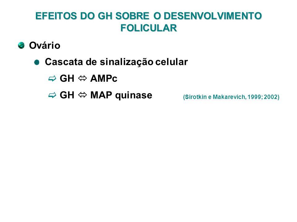 EFEITOS DO GH SOBRE O DESENVOLVIMENTO FOLICULAR (Sirotkin e Makarevich, 1999; 2002) Ovário Cascata de sinalização celular GH AMPc GH MAP quinase