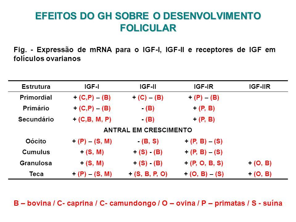 EFEITOS DO GH SOBRE O DESENVOLVIMENTO FOLICULAR Fig. - Expressão de mRNA para o IGF-I, IGF-II e receptores de IGF em folículos ovarianos EstruturaIGF-