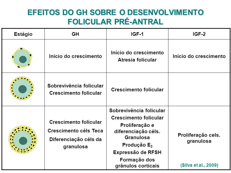 (Silva et al., 2009) EstágioGHIGF-1IGF-2 Início do crescimento Atresia folicular Início do crescimento Sobrevivência folicular Crescimento folicular C