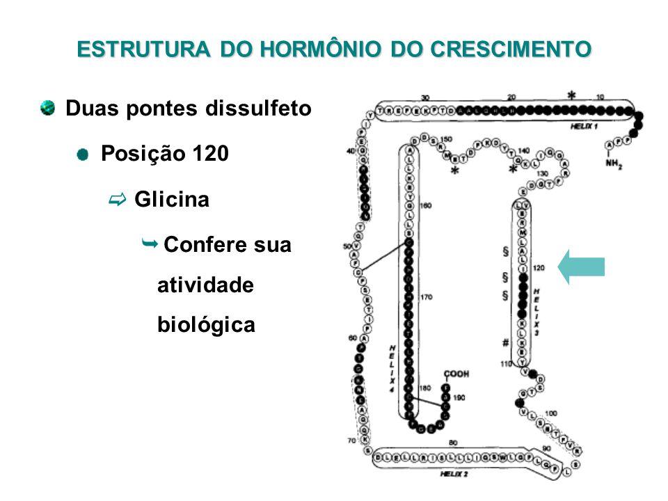 Duas pontes dissulfeto Posição 120 Glicina Confere sua atividade biológica ESTRUTURA DO HORMÔNIO DO CRESCIMENTO