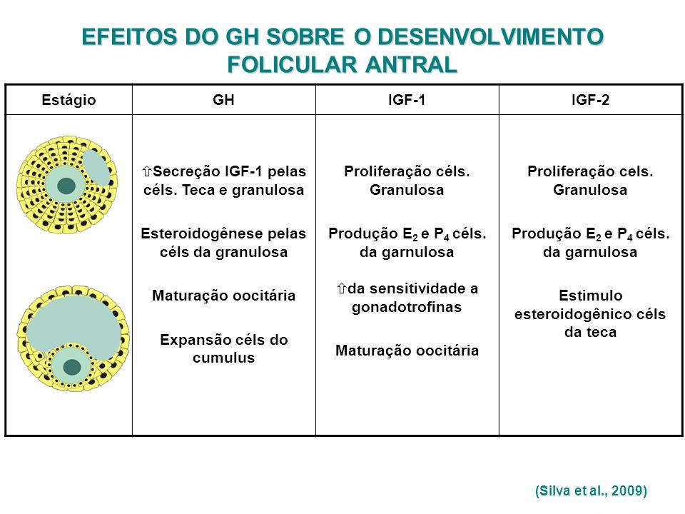 (Silva et al., 2009) EstágioGHIGF-1IGF-2 Secreção IGF-1 pelas céls. Teca e granulosa Esteroidogênese pelas céls da granulosa Maturação oocitária Expan