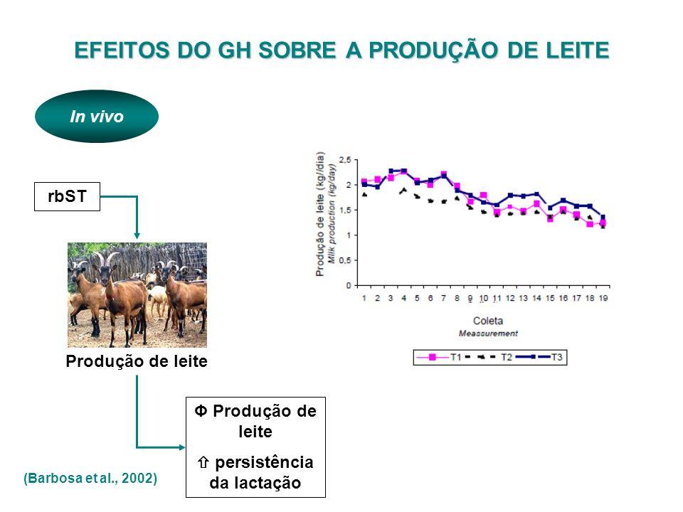 rbST Produção de leite Φ Produção de leite persistência da lactação (Barbosa et al., 2002) In vivo EFEITOS DO GH SOBRE A PRODUÇÃO DE LEITE