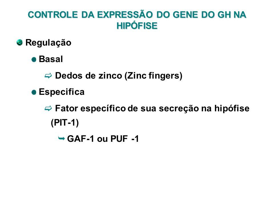CONTROLE DA EXPRESSÃO DO GENE DO GH NA HIPÓFISE Regulação Basal Dedos de zinco (Zinc fingers) Especifica Fator específico de sua secreção na hipófise
