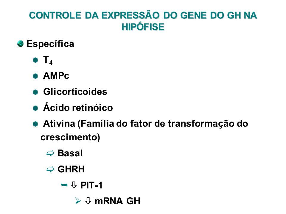 CONTROLE DA EXPRESSÃO DO GENE DO GH NA HIPÓFISE Específica T 4 AMPc Glicorticoides Ácido retinóico Ativina (Família do fator de transformação do cresc