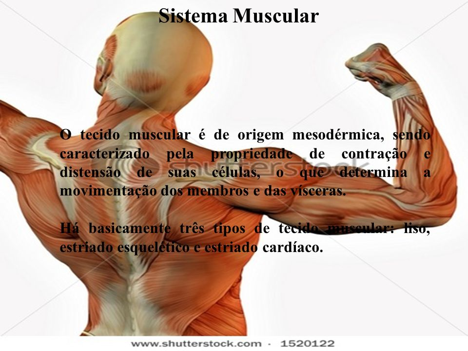 Principais Doenças Musculares 1.Distrofias musculares – As distrofias musculares são doenças hereditárias caracterizadas por uma desordem progressiva dos músculos.Os músculos tornam-se fracos e atrofiam com o tempo, é progressiva, ligada ao cromossoma x (mãe) e atinge 50% do sexo masculino e 50% do sexo feminino, sendo nesse último sem sinais clínicos.