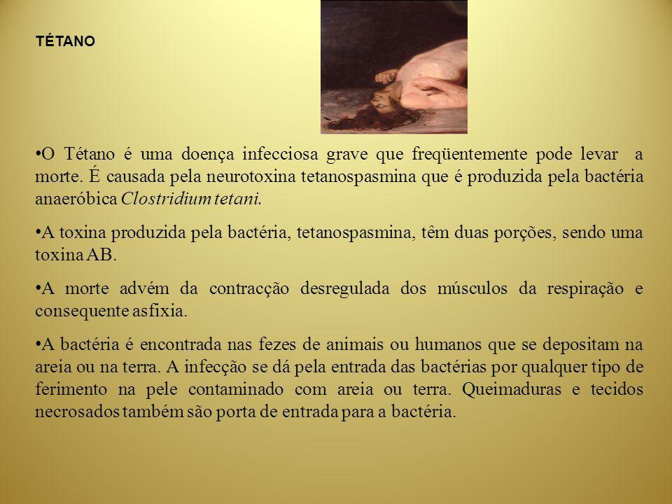 TÉTANO O Tétano é uma doença infecciosa grave que freqüentemente pode levar a morte. É causada pela neurotoxina tetanospasmina que é produzida pela ba