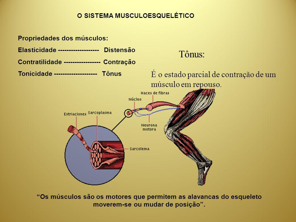 Propriedades dos músculos: Elasticidade ------------------- Distensão Contratilidade ----------------- Contração Tonicidade -------------------- Tônus